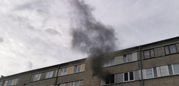 Pies ucierpiał w pożarze mieszkania