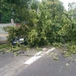 Drzewo spadło na auto na ul. Kościuszki