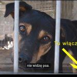Wyjątkowy sposób promocję psiej adopcji