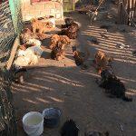 Wyrok w sprawie znęcania się nad setką psów
