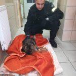 Policjanci zaopiekowali się rannym psem
