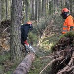 Ponad 50 strażaków cięło w lesie
