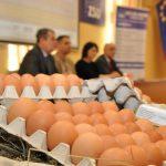 Festiwal z jajem