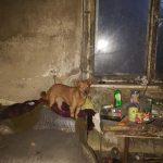Gospodarz zmarł. W domu został samotny pies