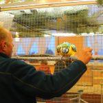 Papugowanie ciepłych krajów