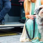 Spór o psa w autobusie