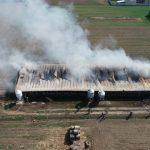 Spłonęło 700 świnek