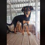 Decyzja prokuratury w sprawie uśpienia psów w schronisku