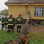 Drzewo uszkodziło dach internatu w Przygodzicach
