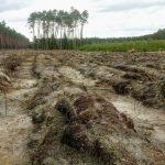 Co się dzieje po wyciętych drzewach w lesie
