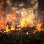 Podpalono las koło Hetmanowa (aktualizacja)
