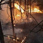 Pożar lasu koło Hetmanowa