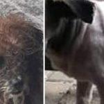 Pies trafił w fatalnym stanie, ale przeszedł metamorfozę
