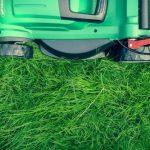 Kośmy trawę rozsądnie