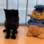 Kot prześlizgnął się do komendy policji