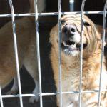 Nowe kojce i odwodnienie dla bezdomnych zwierząt